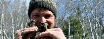 "Songbirds may have ""Borrowed"" DNA to Fuel Migration"