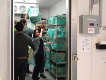 Chilling for First Multi-Collection Conservation Freezing Cycle with New Walk-In Freezer