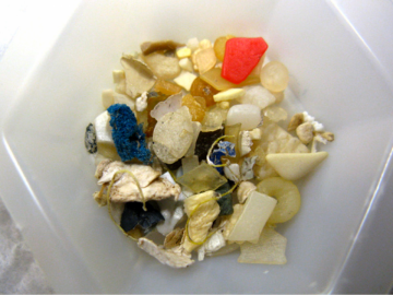 Seabirds Study Shows Plastic Pollution at Surprising Levels Off Pacific Northwest Coast