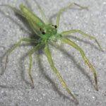 Spiders in Borneo – Thank You Sarawak