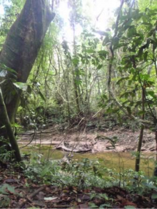 Spiders in Borneo – Jumping Spiders in the Forest