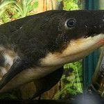 """A trip to the home of the """"Queensland lungfish"""""""
