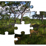 Putting together the biodiversity puzzle