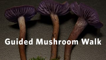 mushroomwalk