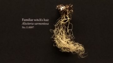 Precious Lichen Collection Evacuated from BC Wildfire Zone