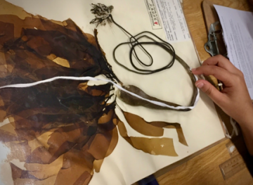 Herbarium Collection BioBlitz!
