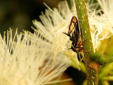 Amazonian treehopper garden
