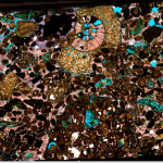 A mineral and fossil conglomerate, showing brilliant green, pink and brown fragments, and an ammonite.